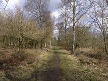 Nagshead RSPB Reserve, Gloucestershire Stock Images