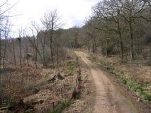 Nagshead RSPB Reserve, Gloucestershire Stock Image