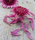 Nah an Blumen Lizenzfreies Stockfoto