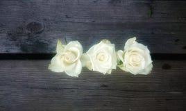Nah an einer Blume Stockbilder