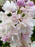 Nah an einer Blume Stockfotos