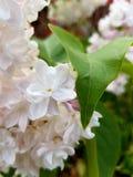 Nah an einer Blume Stockfoto