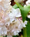 Nah an einer Blume Stockbild