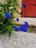 Nah an einer Blume Stockfotografie