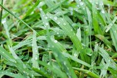 Nah fotografiertes Gras mit Wassertropfen stockbild