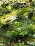 nah oben von einem gr?nen Moos und von einer Flechte bedeckte den Felsen, der durch Farne und Anlagen im hellen Fr?hlingssonnenli stockfotos