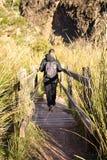 nah oben von einer Holzbrücke auf einem Flussviel von Kräutern und von Eilen am sonnigen Tag Die Brücke hat ein hölzernes Gelände lizenzfreie stockbilder