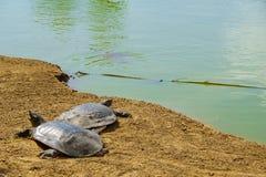 Nahal Alexander Nature Reserve Arkivfoto
