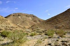 Nahal Zafit在Neqev沙漠 库存图片