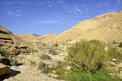 Nahal Zafit в пустыня Негев Стоковые Изображения
