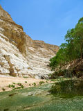 The Nahal Zin, En Akev in Negev Desert, Israel Royalty Free Stock Image