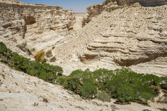The Nahal Zin in Negev Desert, Israel Royalty Free Stock Photography