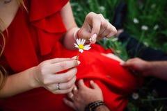 Nahaufnahme über Ansicht der weiblichen zarten Hände wählen die Gänseblümchenblumenblätter weg aus Die Frau spielt das Spiel `` e lizenzfreies stockbild