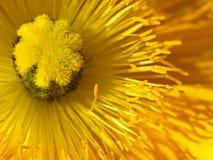 Nahaufnahme-Abbildung der Mohnblume-Blume Lizenzfreie Stockfotografie