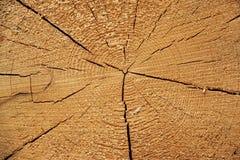 Nahaufnahme alte Kiefer-der rauen Querschnitt-Hintergrund-Beschaffenheit Stockbilder