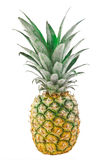 Nahaufnahme-Ananas lokalisiert auf dem weißen Hintergrund Stockfotografie