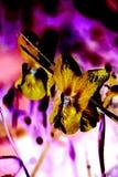 Nahaufnahme-Ansicht einer Viola als Farbnegativ Stockbilder