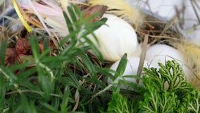 Nahaufnahme, Ansicht von oben, Rotation, Blumen-Ostern-Zusammensetzung in der rustikalen Art, besteht aus Eiern, Federn, Grünpfla stock video