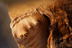 Nahaufnahme auf Beschaffenheit des rohen Holzes Lizenzfreie Stockfotos