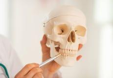 Nahaufnahme auf Doktor, der auf Zähne des menschlichen Schädels zeigt Lizenzfreie Stockbilder