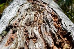 Nahaufnahme auf einem nassen Verrottungeichen-Baumkabel stockfoto