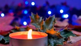 Nahaufnahme auf einer roten Wachskerzen- und -weihnachtsstechpalme stock footage