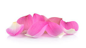 Nahaufnahme auf Lotosblumenblatt auf weißem Hintergrund Lizenzfreies Stockbild
