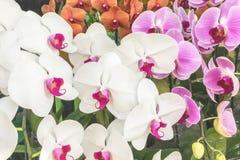 Nahaufnahme auf schönem Naturdetail vieler bunten Orchideen Lizenzfreies Stockbild