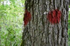 Nahaufnahme Baums Farben-markierten Sugar Maples (Acer-Zucker) Lizenzfreies Stockbild