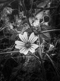 Nahaufnahme-Blume im Garten lizenzfreies stockbild