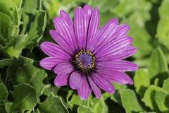Nahaufnahme-Blumen Stockfotos