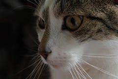Nahaufnahme catface Lizenzfreie Stockfotografie