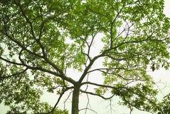 Nahaufnahme der üppigen Baumverzweigung Lizenzfreie Stockfotos