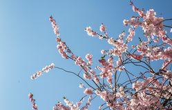 Nahaufnahme der Azalee-Blume stockbild