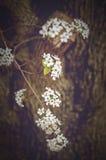 Nahaufnahme der Azalee-Blume Lizenzfreies Stockbild