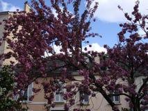 Nahaufnahme der Azalee-Blume lizenzfreie stockbilder