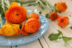 Nahaufnahme der Azalee-Blume stockfoto