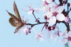 Nahaufnahme der Azalee-Blume stockfotografie