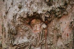 Nahaufnahme der Barke eines alten Baums Lizenzfreie Stockbilder