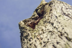 Nahaufnahme der Barke eines Baums Lizenzfreies Stockbild
