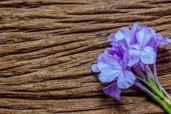 Nahaufnahme der blauen Bleiwurz blüht auf hölzernem Hintergrund Stockfotos