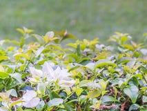 Nahaufnahme der Blume mit undeutlichem Naturhintergrund Lizenzfreies Stockfoto