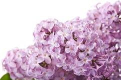 Nahaufnahme der Blumen Lizenzfreies Stockbild