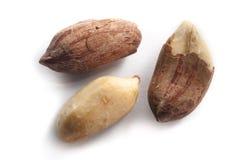 Nahaufnahme der Erdnüsse Lizenzfreie Stockfotos