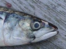 Nahaufnahme der Fische an Bord Lizenzfreies Stockbild