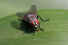 Nahaufnahme der Fliegen stockfoto