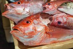 Nahaufnahme der frischen Fische im Markt Stockbild