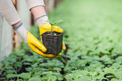 Nahaufnahme der Gartenarbeitskraft Stockbild