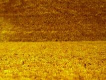 Nahaufnahme der Graswolldecke   Stockbild