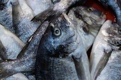 Nahaufnahme der grauen Meeräsche vom Fischhändler lizenzfreies stockbild